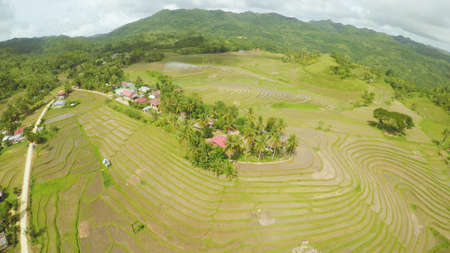 Rice fields of the Philippines. The island of Bohol. Filipino village with houses.
