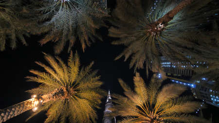 Garlands shine on the palm trees in Dubai at night.