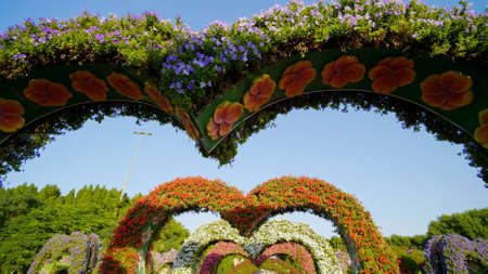 Heart shaped flower beds at the Alley of Hearts. Dubai Miracle Garden is famous for its extraordinary flower installations. A couple of people walking around at the park.