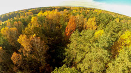 Aerial photography of the autumn forest in Russia.