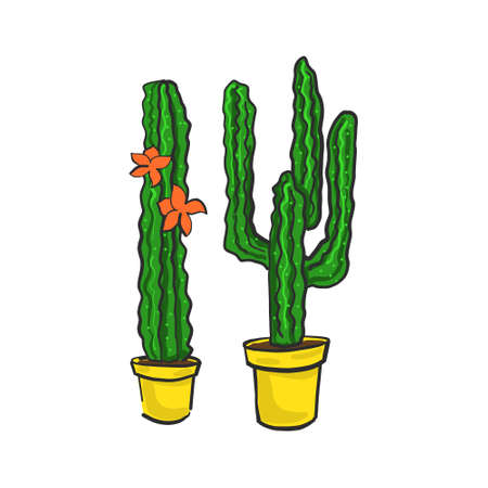 Cacti in pots color vector illustration on a white background.