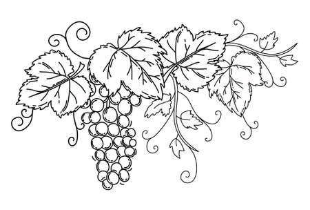 Bunch of grapes with leaves. Black outline on an isolated white background. Vine. Vector.