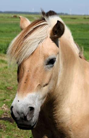 Close up of a horses head  photo