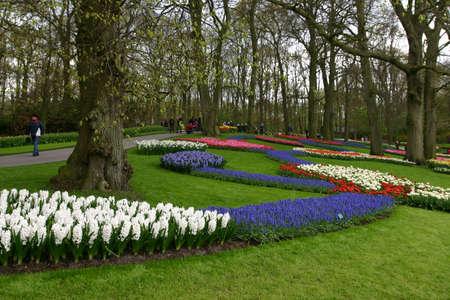 lisse: Mooie bloemen Keukenhof, Lisse Stockfoto