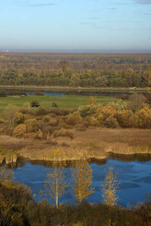 bayou swamp: Colorful autumn forest near Danube river