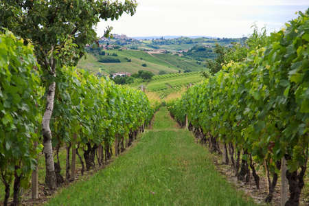 Hills and vineyards in Piedmont (Italy) Stock Photo