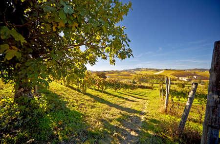 Calosso (Asti, Piedmont, Italy): landscape
