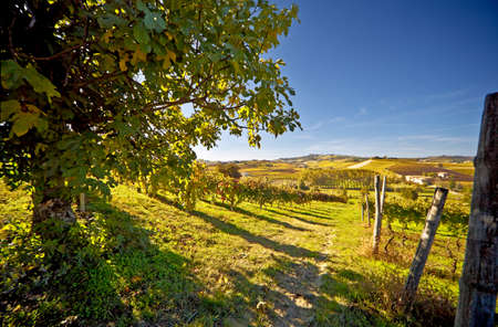 Calosso (Asti, Piemonte, Italië): landschap Stockfoto