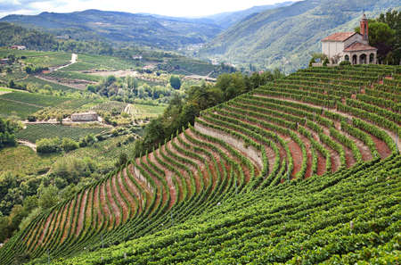 terracing: Cossano Belbo (Piedmont, Cuneo, Italy): landscape of Langhe. On the right the Church of San Bovo. Stock Photo
