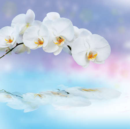 Close up of white orchids with eflection Stock Photo