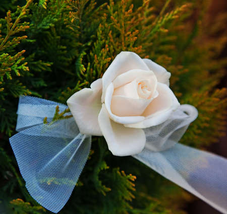 tulle: White rose with tulle