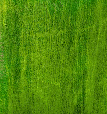 Green leather texture. photo