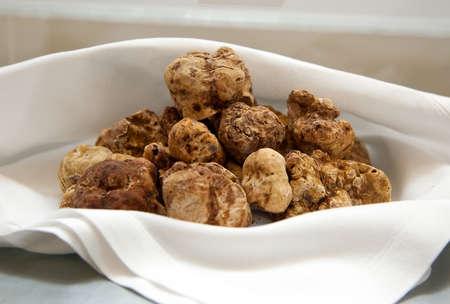 hongo: Grupo de trufa blanca italiana