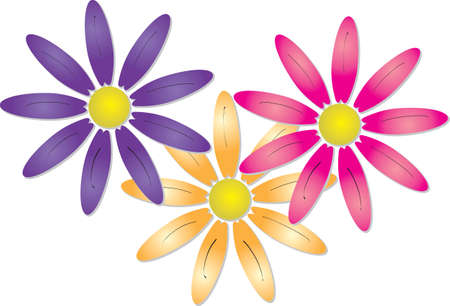 Vector illustration of three pretty spring flowers or daisies in colourful orange  pink and purple overlapping and isolated on a white