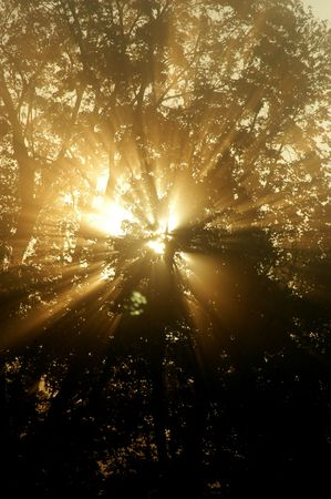 literally: Sun literally explodes in a tree with fog