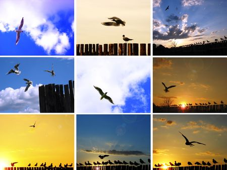 A flock of seagulls riding the winds photo