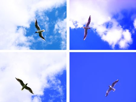 seagull riding the winds photo