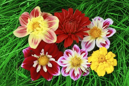 six flowers on Grass background photo