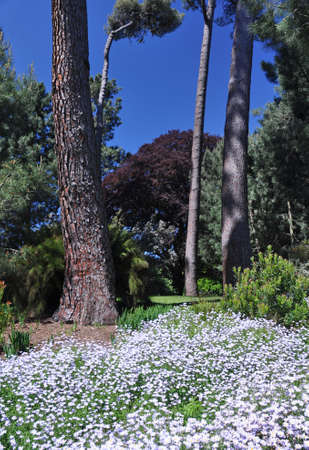botanical gardens: The English style Botanical Gardens, Christchurch, New Zealand  Stock Photo
