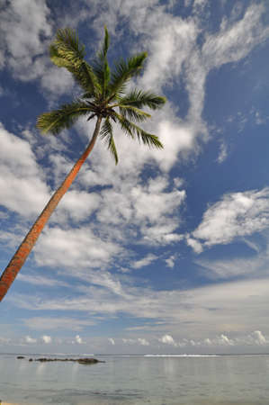south pacific ocean: The tranquil beaches of the  South Pacific Ocean really are paradise found. This is the Coral Coast on the island of Viti Levu (Fiji) near Sigatoka