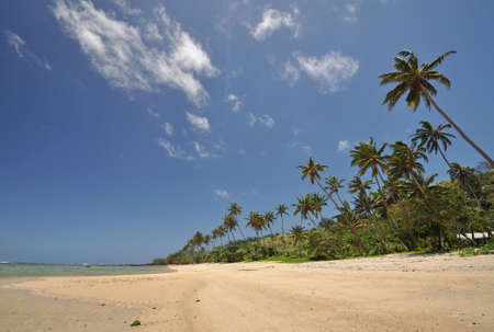 fijian: Palm trees fringed beach against a tropical sky on the edge of the Coral Coast on the Fijian island of Viti Levu in the South Pacific Stock Photo