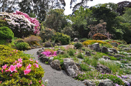 Rhododendrons in the Rock Garden at the Botanical Gardens in Christchurch, New Zealand.