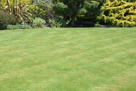 A perfect English country garden with manicured lawn and walled raised boarder surrounded by shrubs, small trees and some colourful flowers.