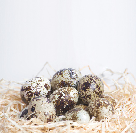 quail nest: Few quail eggs in nest with willow branch, close up Stock Photo