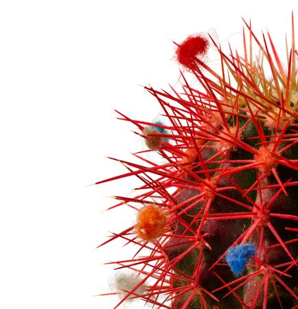 Decorated red needles of green cactus on white background Stock Photo