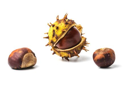 horse chestnut seed: Chestnut fruit half open and nuts on white background