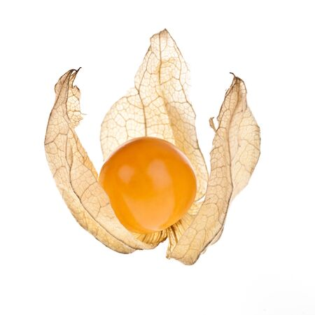 completely: Physalis peruviana, completely isolated on white background Stock Photo