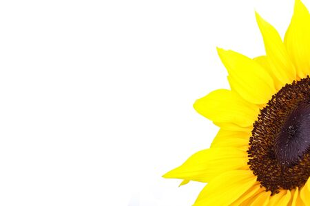 Perfect Sunflower, completely isolated on white background Stock Photo - 7528778