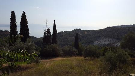 Olive Tree Farm in Landscape Distance in Europe/Greece Stockfoto
