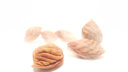 Fruit Pits on White Background.  Nectarine Peach Seeds.  Artistic With Misty/Foggy Effect.