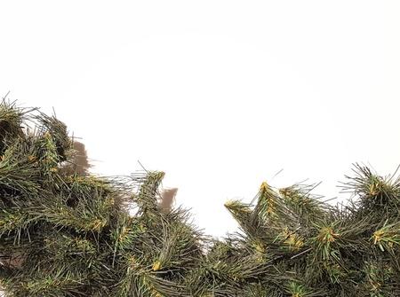 Merry Christmas Garland.  Happy Holidays and Season's Greetings Greenery Decoration.