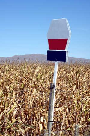 parch: Drought affected maize crop