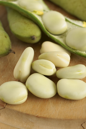 Broad beans or fava beans a popular legume in North African and Asian cuisine