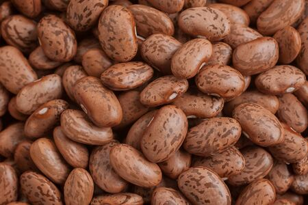 speckle: Pinto Beans a popular bean used Mexican cooking