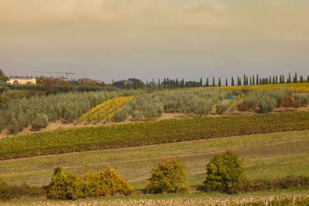 Vineyard in autumn, in the Chianti region,Tuscany,Italy. photo