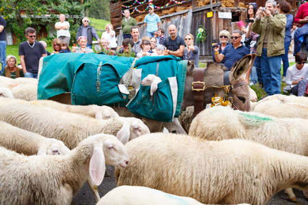 se: Falcade, Belluno, Italy - September 26, 2015: Se Desmonteghea a great party in Falcade for the livestock returning from the highland pastures Editorial
