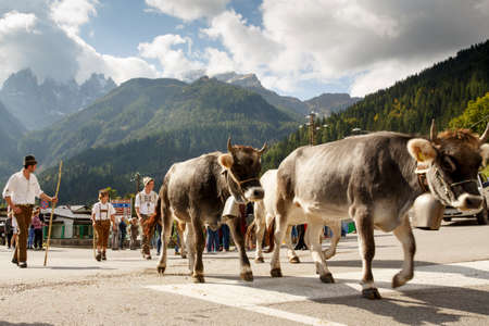 returning: Falcade, Belluno, Italy - September 26, 2015: Se Desmonteghea a great party in Falcade for the livestock returning from the highland pastures Editorial