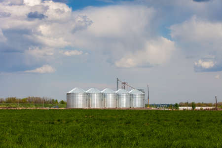 agricultural crops: Tanks for the storage of grain standing in the field. The elevator in the background of green field. Granary for agricultural crops