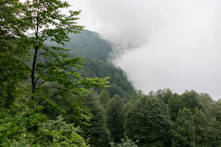 Thick clouds and fog in the mountains approach the edge of the forest. High humidity 写真素材