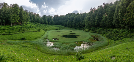 Panoramic view of swampy lake overgrown with sedge