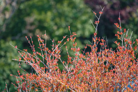 Bushes with red leaves and cobwebs between the branches. Background image.