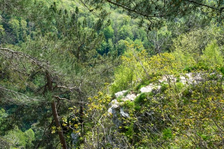 Rocky cliff in dense green forest. Spring colors in the mountain forest. Pines on a green mountain slope.