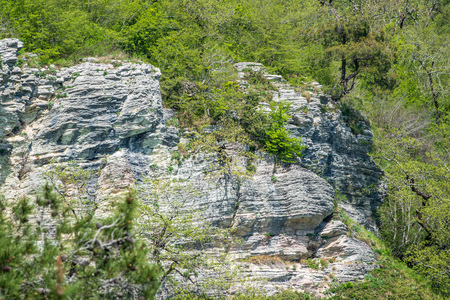 Rocky cliff in dense green forest. Spring colors in the mountain forest. Natural background. Spring season.