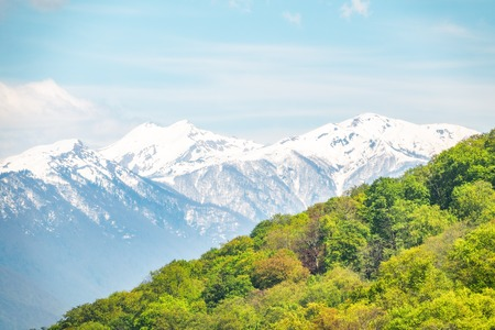 Thick forest in a green valley. Snow capped mountains visible on the horizon. Spring colors