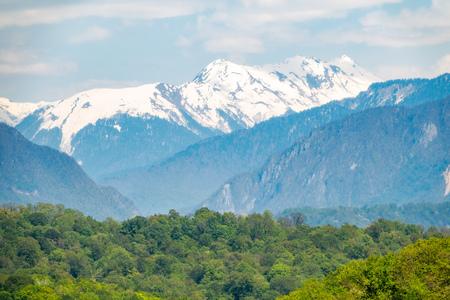 Dicker Wald in einem grünen Tal. Am Horizont sind schneebedeckte Berge zu sehen. Frühlingsfarben