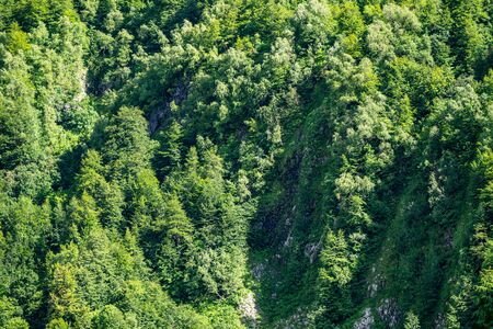 Rocky cliff in dense green forest. Spring or summer colors in the mountain forest. Natural background. Spring or summer season.